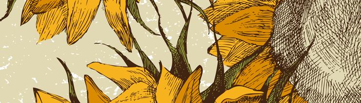 header-sunflower2